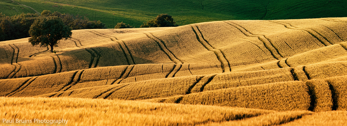 Photograph Tuscan Barley Blanket by Paul Bruins on 500px