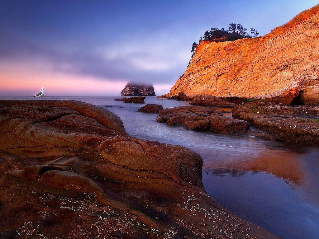 Photograph Seagull Rock Cafe by Christina Angquico on 500px