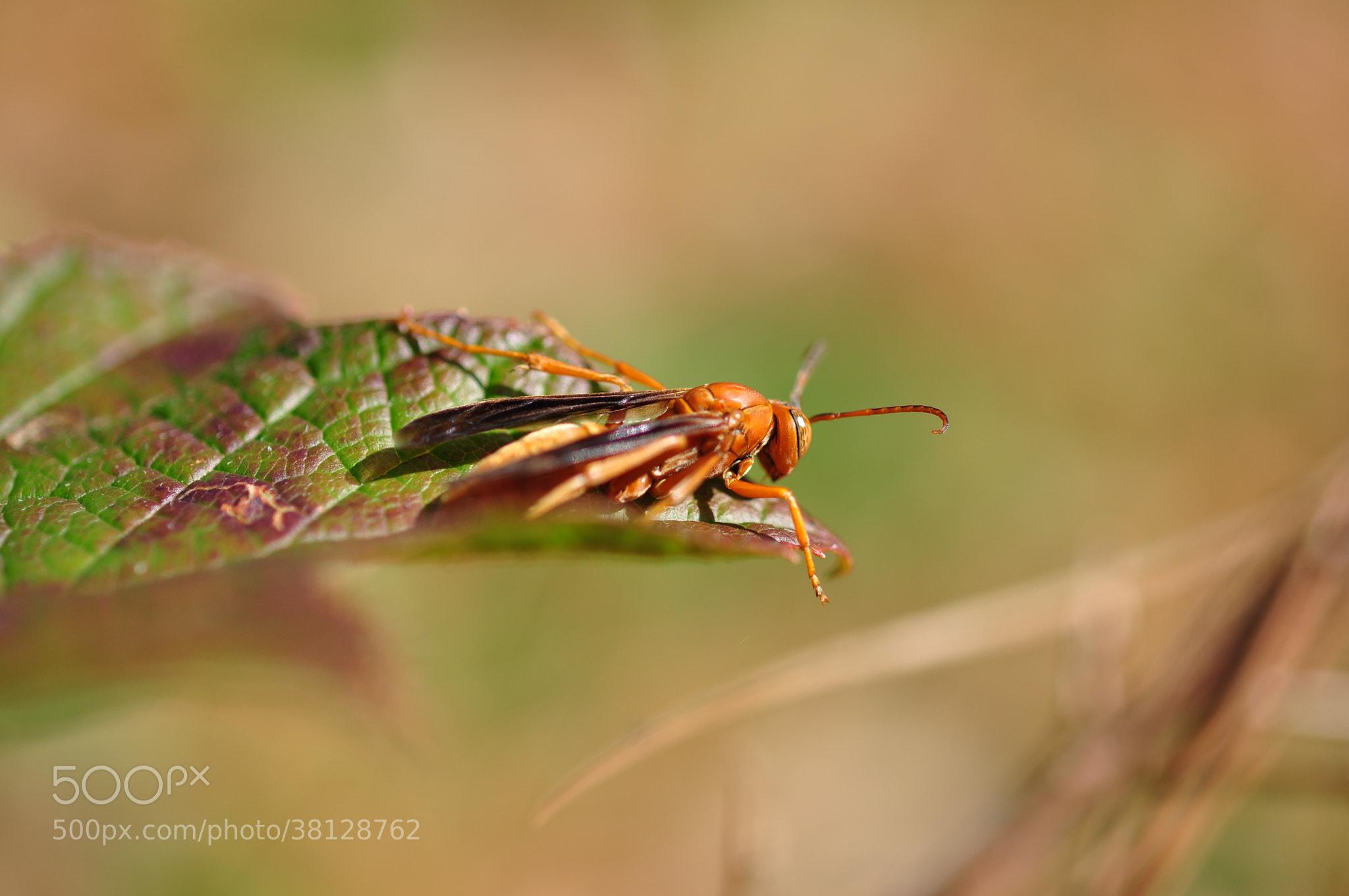 Photograph Bug by nitrodarkside on 500px