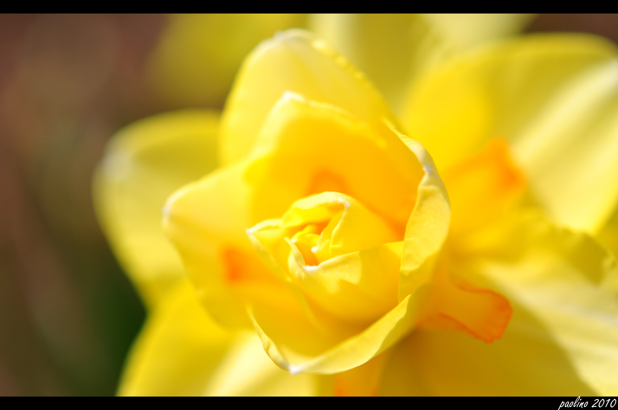 Photograph Yellow by nitrodarkside on 500px