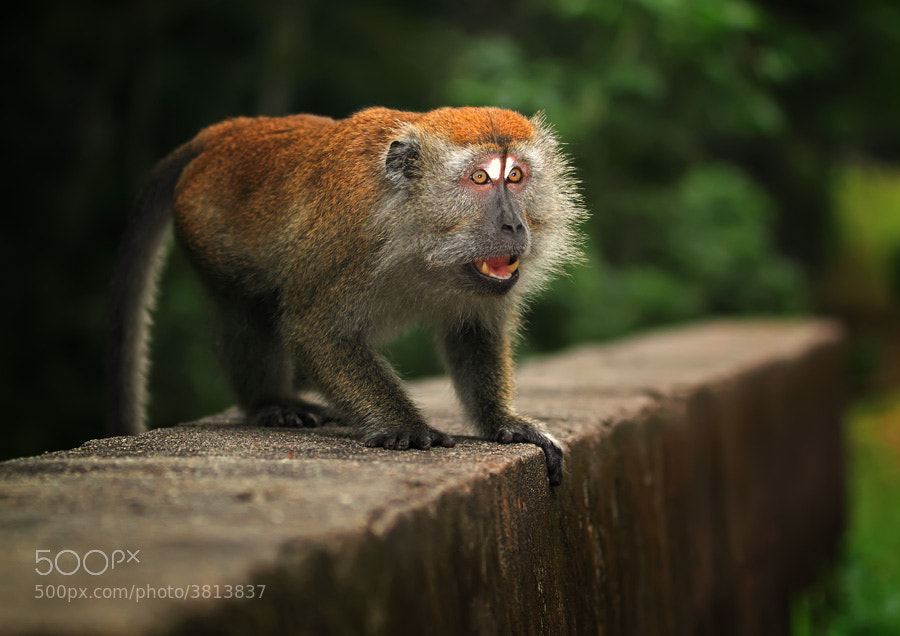 Photograph angry by shikhei goh on 500px