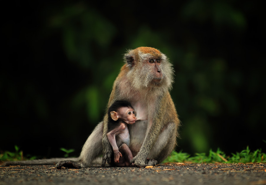 Photograph mother and son by shikhei goh on 500px