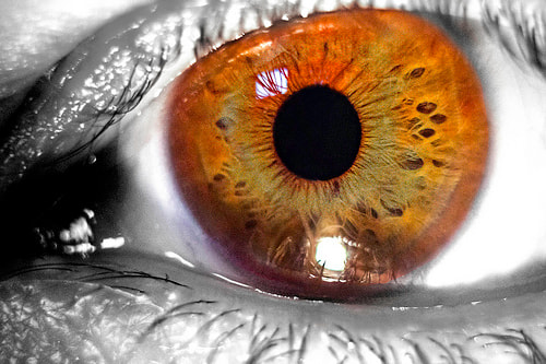 Photograph The Eye by Practical Design on 500px