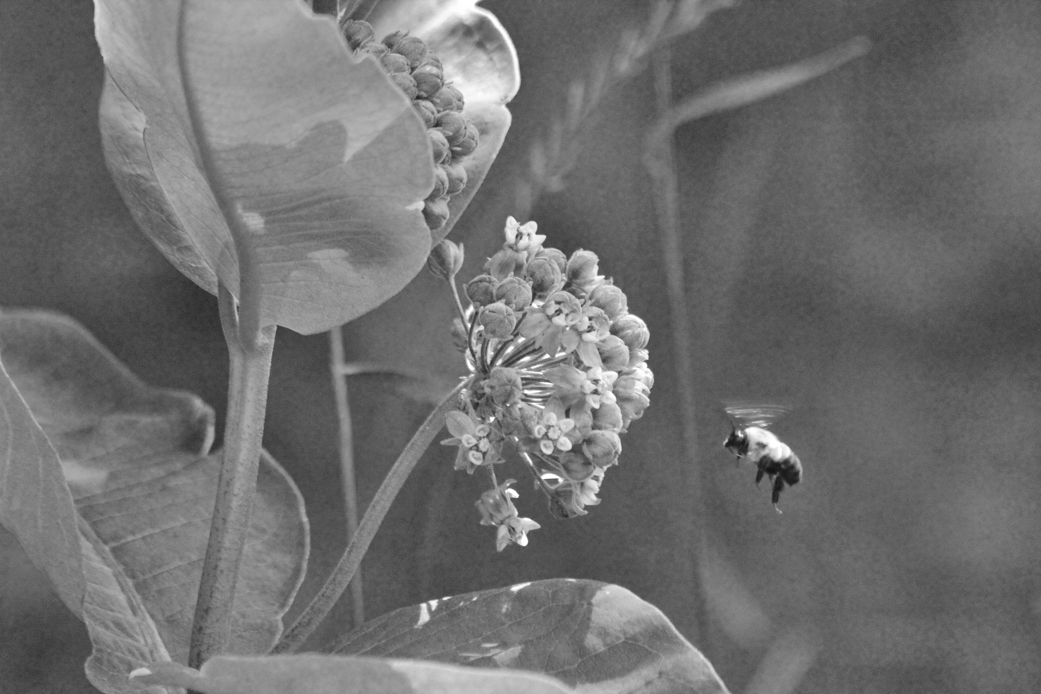 Photograph Bee Buzz by Eirene Corcoran on 500px