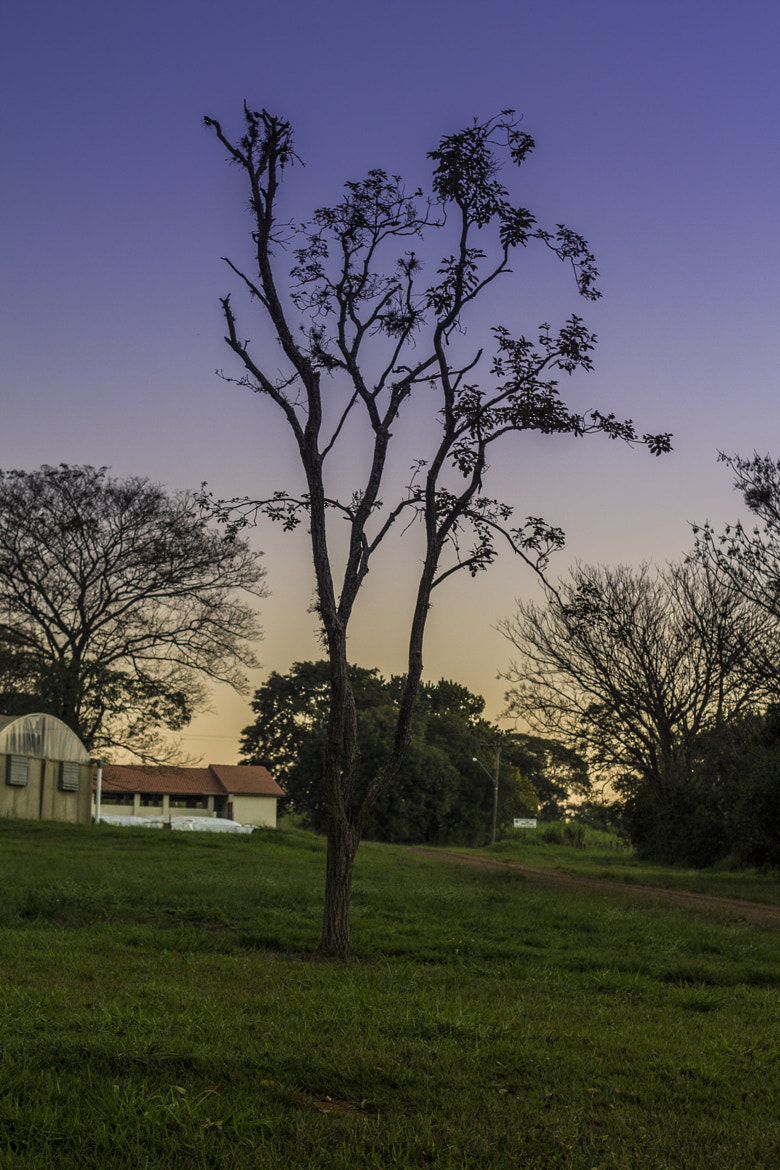 Photograph Lonely Tree by Mateus Lopes on 500px