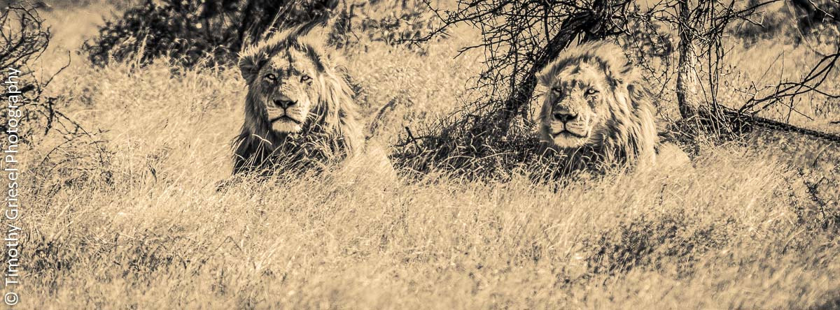 Photograph Brotherly Stare by Timothy Griesel on 500px