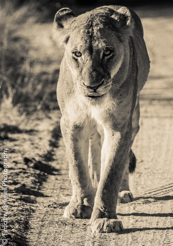 Photograph Missy by Timothy Griesel on 500px