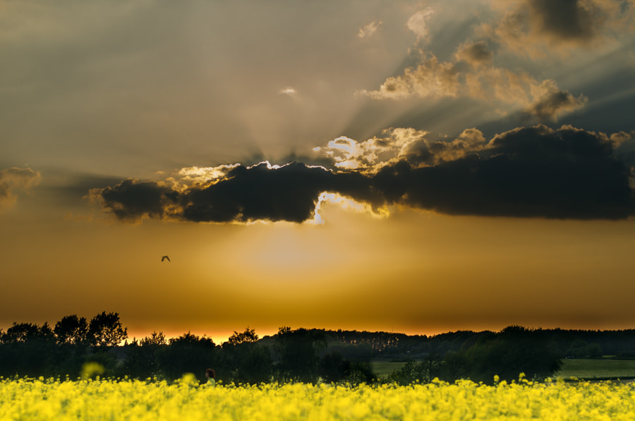 Photograph sunset in june by Gunter Werner on 500px