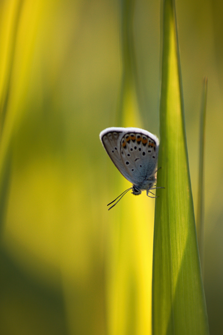 Photograph butterfly by Michal Svoboda on 500px