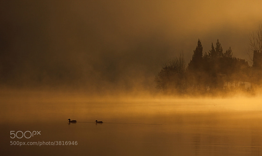 Photograph Morning Fog by Miguel Antunes on 500px