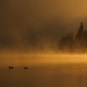 Morning Fog by Miguel Antunes (Mantun01)) on 500px.com