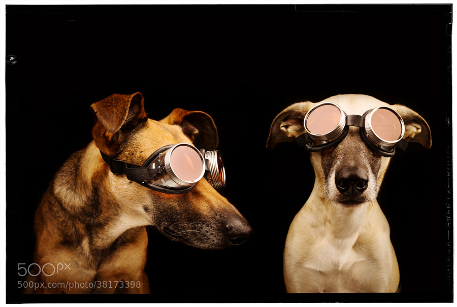 Photograph Codo and Gaga by Elke Vogelsang on 500px
