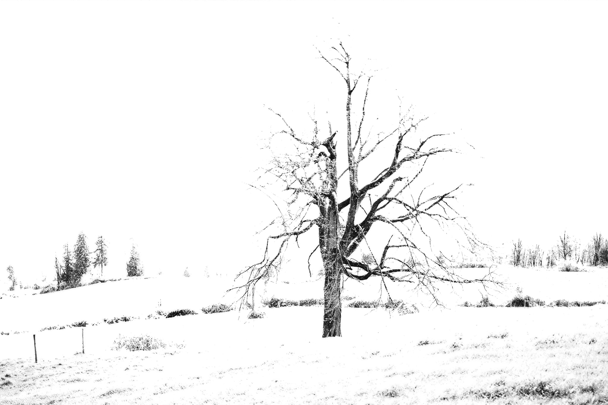 Photograph A Cold Tree in Winter by 1dirtboy on 500px