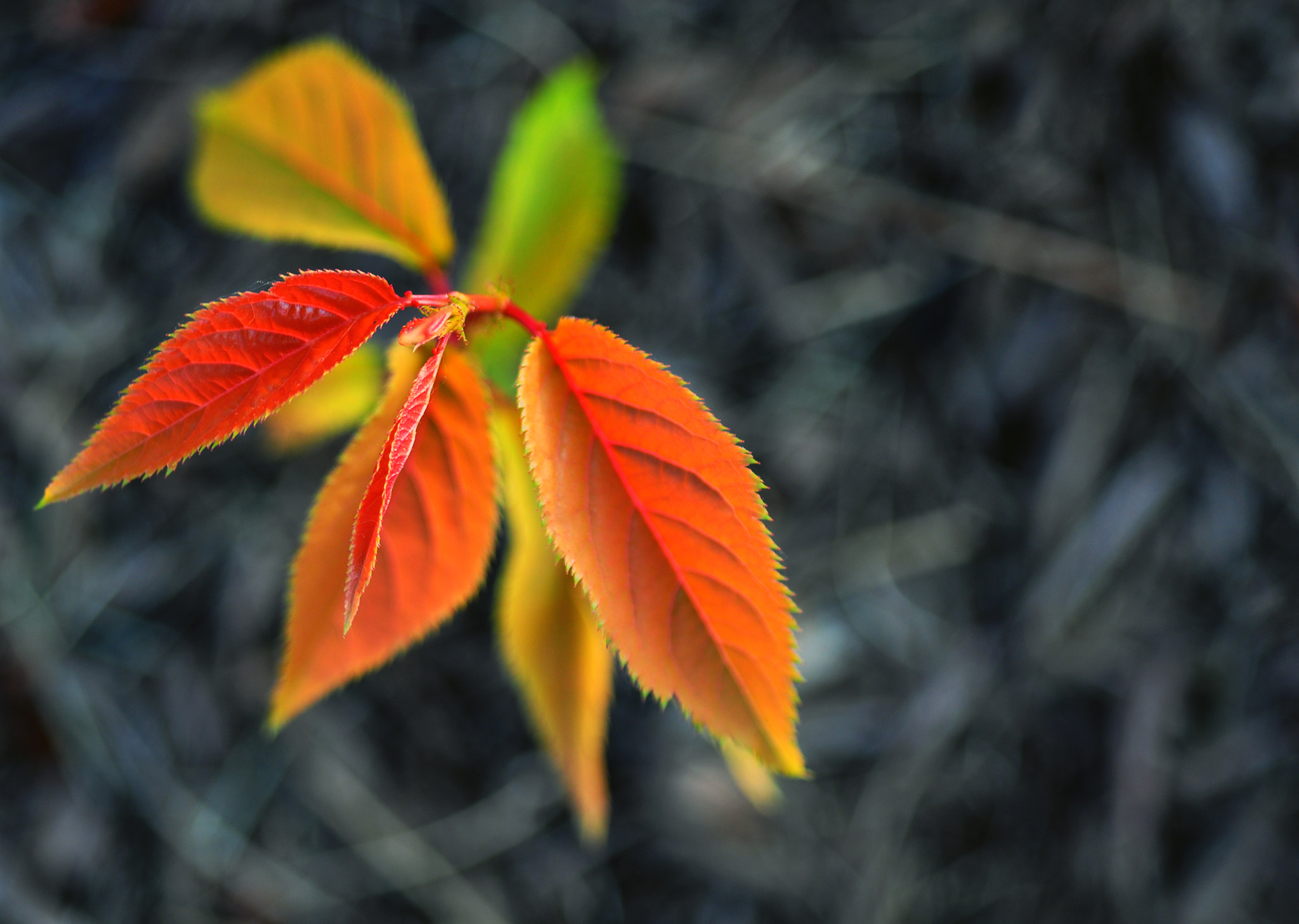 Photograph Glow by Enkased  on 500px