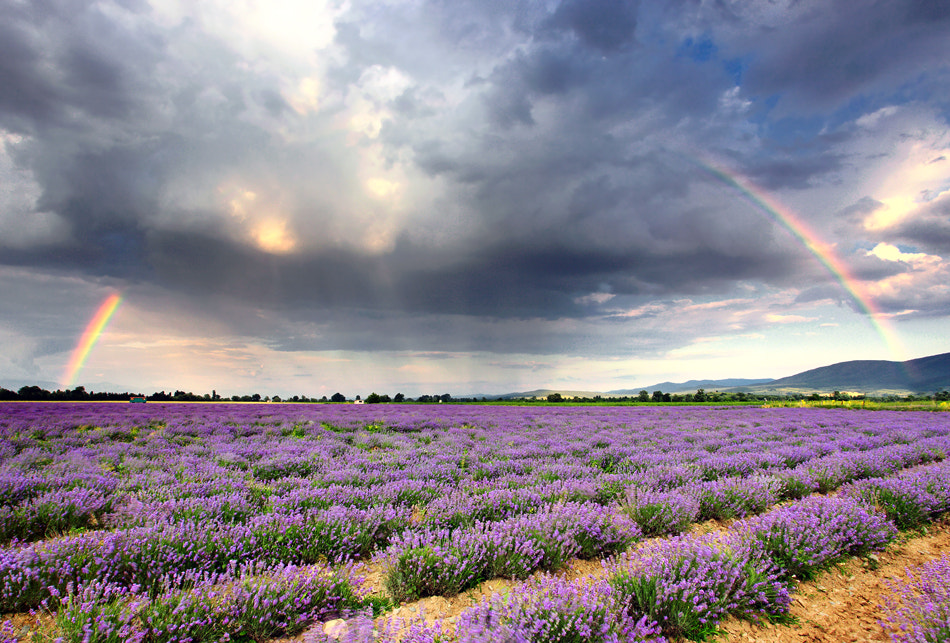 Photograph Lavender Rainbow by Pavel Pronin on 500px
