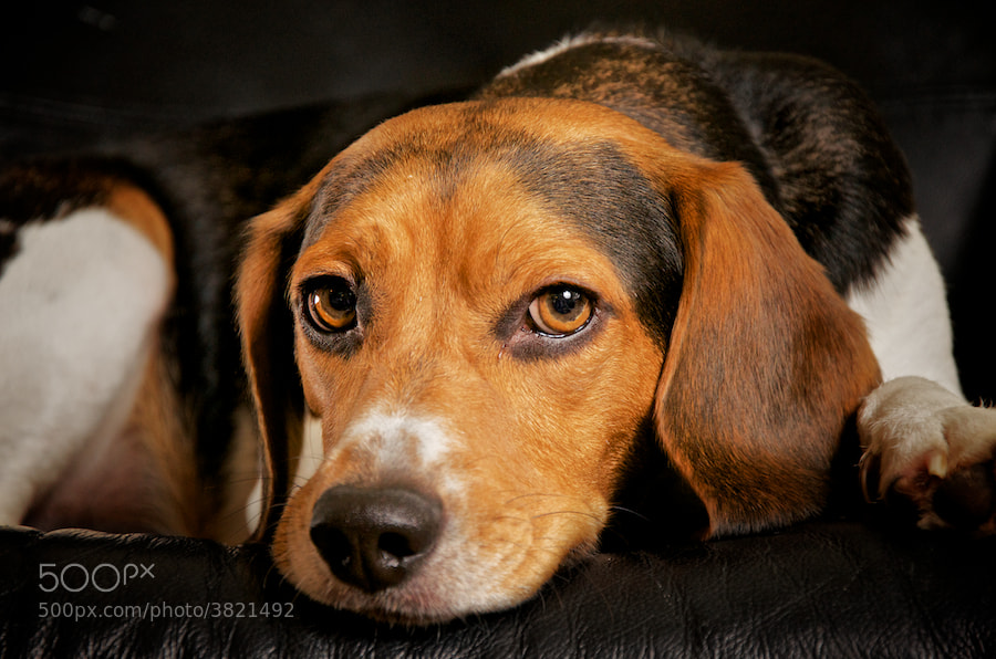 Photograph Puppy Love 2 by Adriel Henderson on 500px