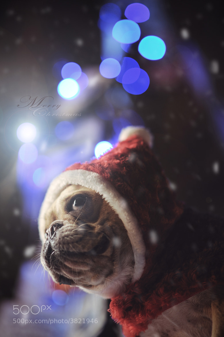 Photograph Merry Christmas by Lu Donfer on 500px