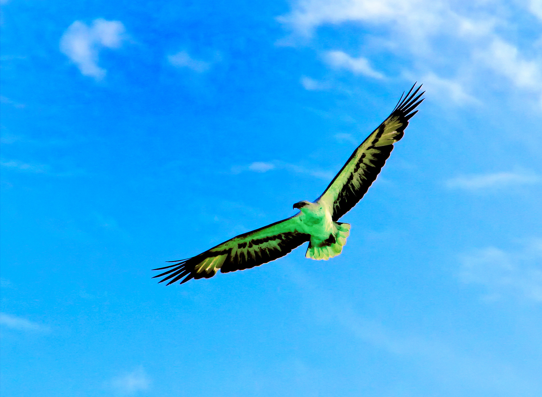 Photograph Soaring High by Jamie Condon on 500px