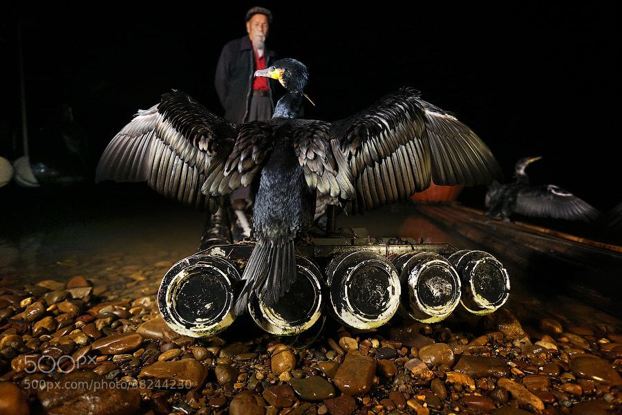 Photograph  Fishercormorant by Mark Podrabinek on 500px