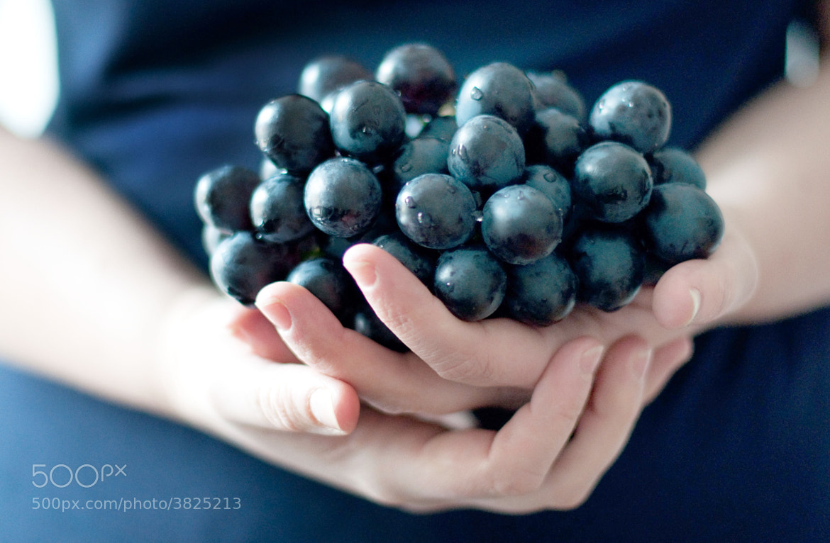 Photograph My blueberry nights by Andrea Peipe on 500px