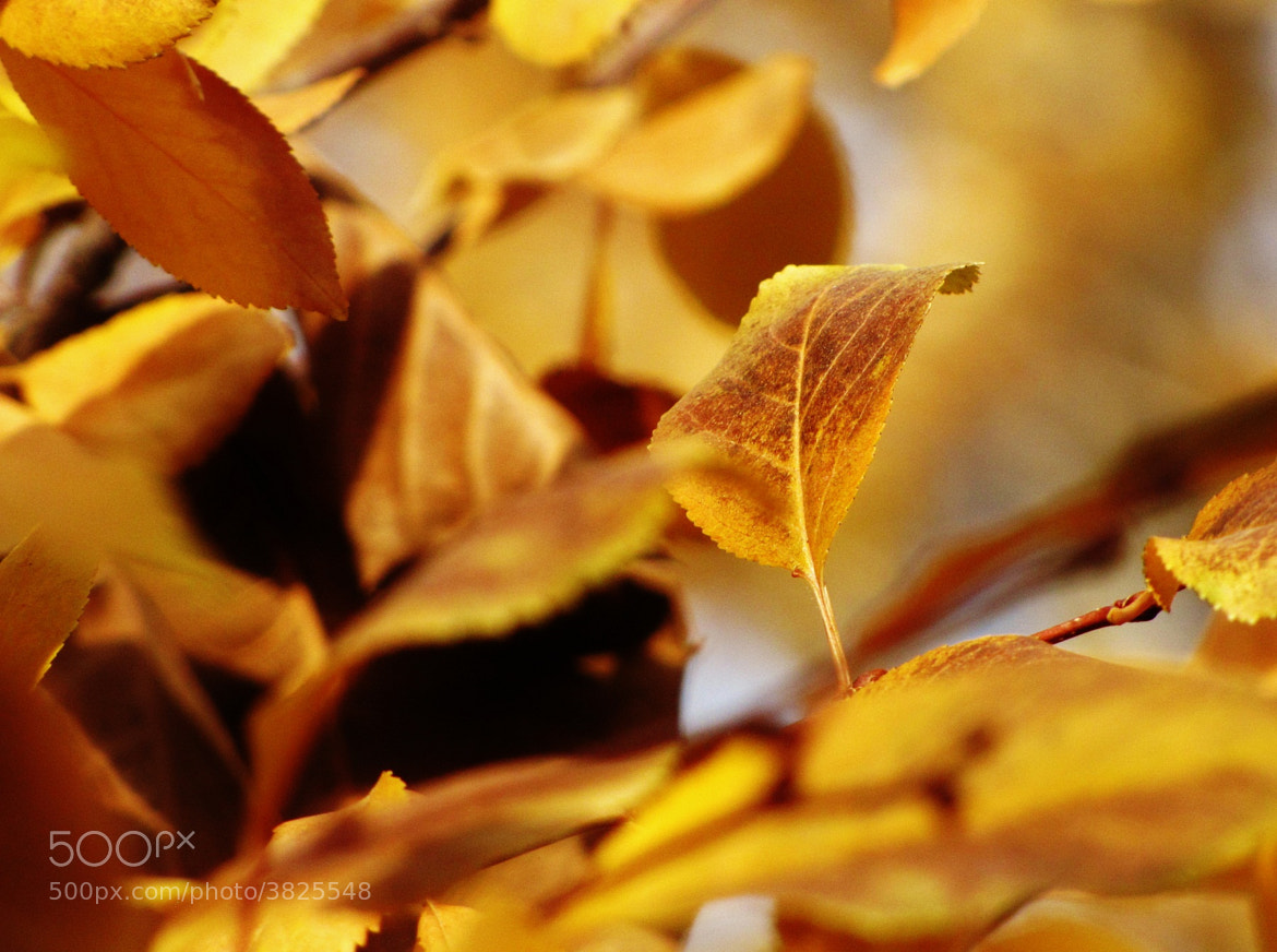 Photograph Fall 04 by Sam Shah on 500px