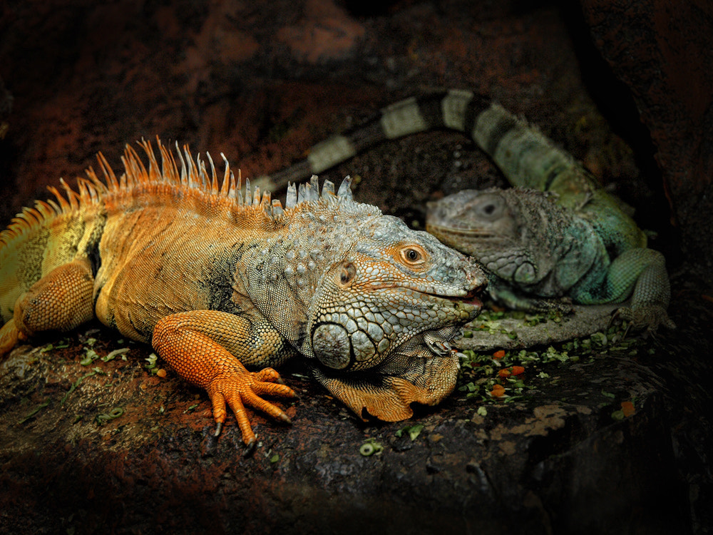 Photograph the two dragons by Irawan Subingar on 500px