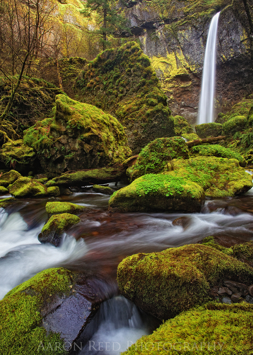 Photograph The Moss King by Aaron Reed on 500px