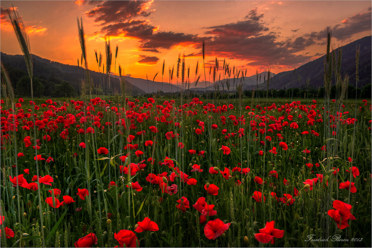 Photograph Mohn im Abendlicht by Friedrich Beren on 500px