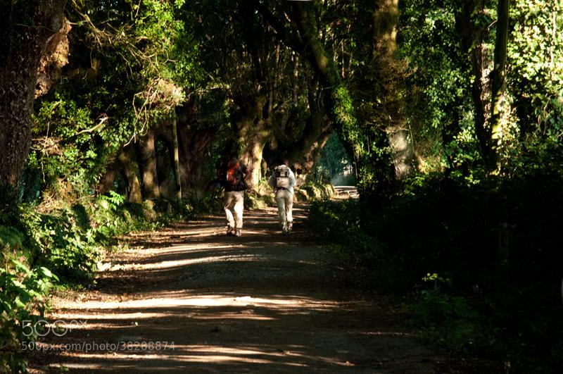 Camino de Santiago 2012  Sarria - Gonzar ________________________   Salgo de Sarria bien temprano, pues quiero llegar a Gonzar   El Camino se ha convertido en una procesión, no se de donde ha salido tanta gente, bueno si que lo se a pesar de estar ya en Septiembre la afluencia sigue siendo muy alta sobre todo de Italianos y Alemanes, Españoles poquitos.   Mi mochila pesa menos, la descargue en Samos, pero yo acuso tantos días de Camino,   Sin pretenderlo entablo conversación con una chica gallega que ha salido de Sarria y esta haciendo su primer Camino, me habla de sus dudas, de sus ilusiones, de sus temores, vamos juntos hasta Porto-Marín, yo casi la convenzo de que venga a Gonzar, pasamos el puente le hablo de que a la izquierda tenemos una gasolinera donde se puede comprar o tomar alguna cosa y descansar, pero ho sorpresa, la gasolinera esta cerrada.   Ella me dice que Gonzar esta a 8 Km. y yo le digo que son 4,   Ella tenía razón, pero me di cuenta demasiado tarde, ella decide quedarse en Porto-Marín haciendo lo correcto, no tenia ninguna necesidad de forzar, me da un plato y me desea suerte y yo continuo adelante   (La anécdota es que habíamos hablado de encontrarnos al día siguiente en Palas de Rey, pero eso no ocurrió, pues yo avance un poco mas y olvide el tema, pero las cosas del Camino, en Santiago, servidor esta comprando unos recuerdos en una tienda y quien llega, era ella que había llegado me da un abrazo, me comenta su experiencia, esta muy feliz, le digo que tenia razón, que eran 8 Km. y que me costo mucho llegar a Gonzar, y esbozo una simpática sonrisa, nos damos los teléfonos para quedar por la tarde para tomar una cerveza, pero llamo y no tengo respuesta)    En los poco más de ocho kilómetros que quedan hasta Gonzar vuelvo a la tranquilidad del caminante solitario.   Me encuentro a un grupo muy numeroso de ciclistas, con todo un autocar de avituallamiento donde estaban comiendo, me dan una botella grande de agua fresca, querían llegar aquella misma