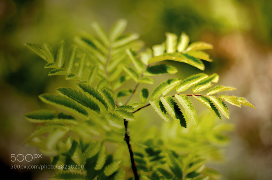 Photograph young tree by Gunter Werner on 500px