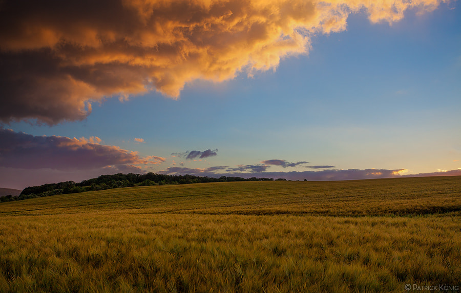 Photograph barley field at solstice evening by Patrick König on 500px