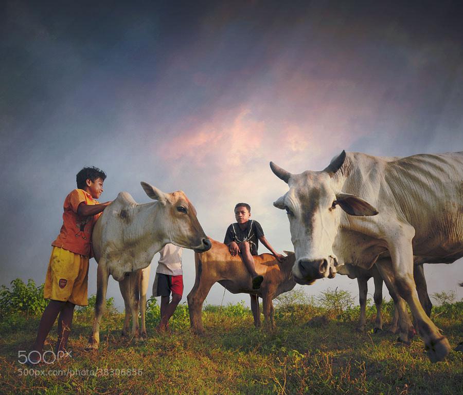 Photograph cowherd boy by Teuku Jody  Zulkarnaen on 500px