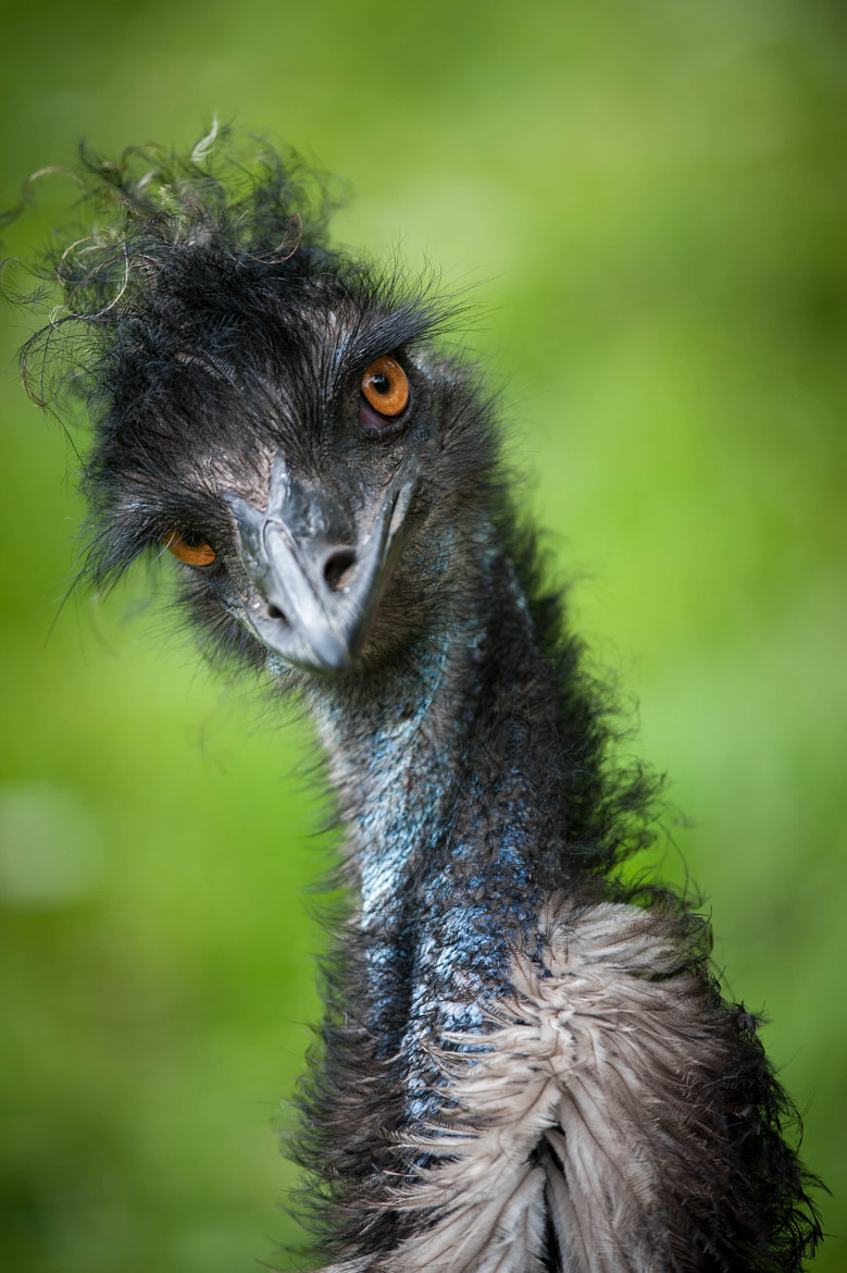 Photograph Stylish Emu by Justin Lo on 500px