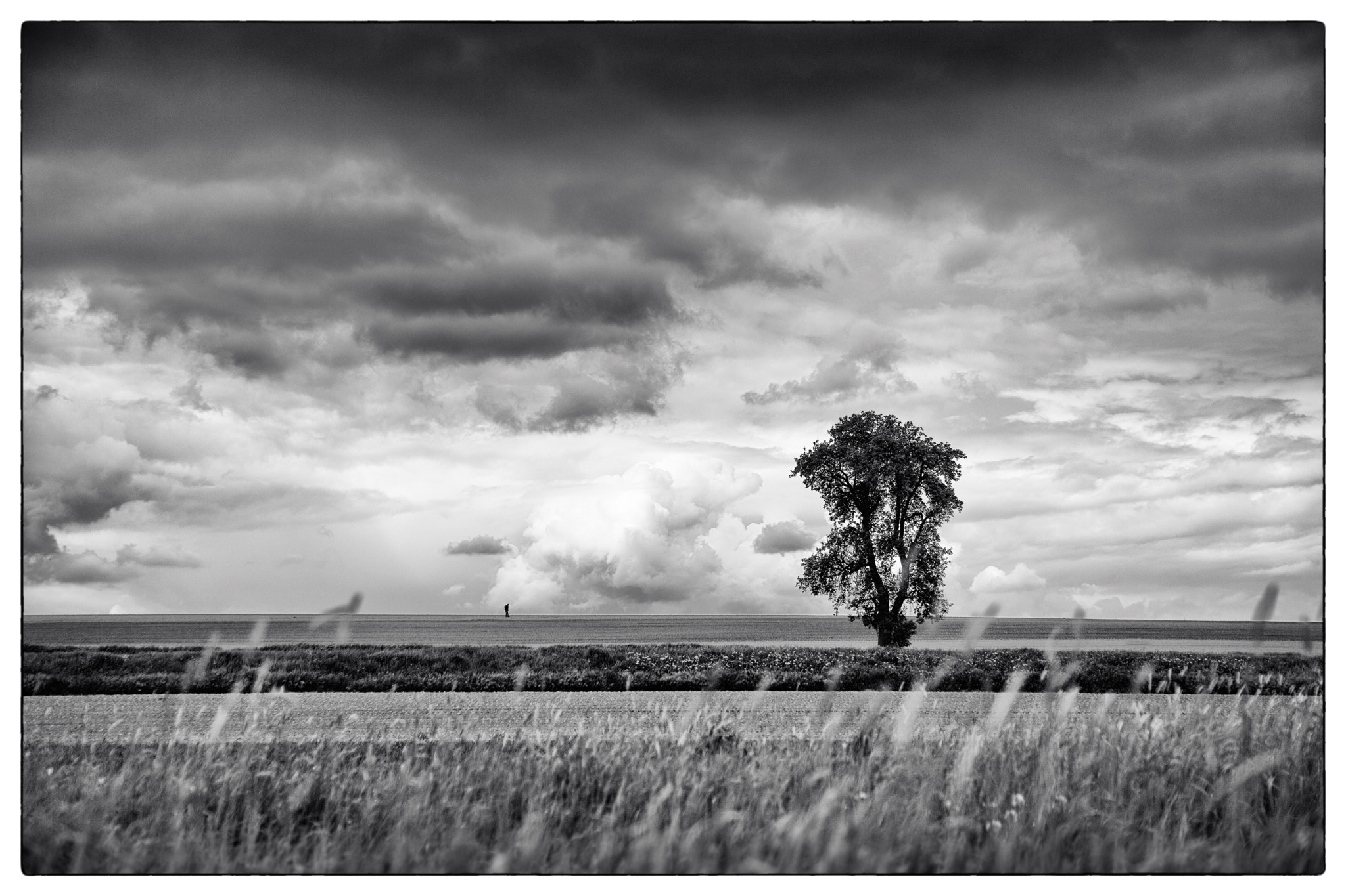 Photograph lone man (tree) by Ralf Kuhn on 500px