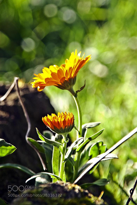 Photograph En mi jardin: by Juan Manuel Garcia Garcia on 500px