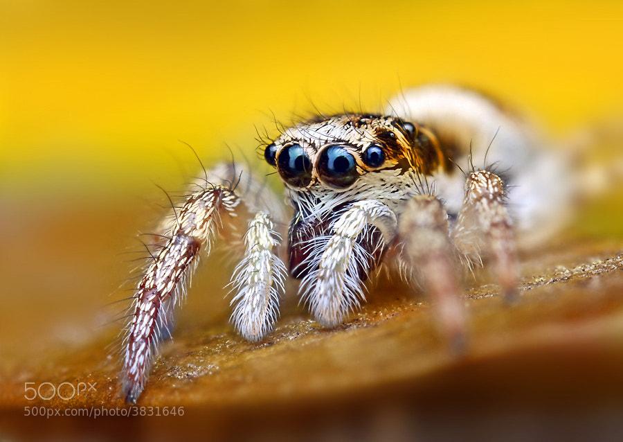 Photograph Big OoOoO by Ondrej Pakan on 500px