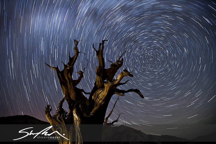 Photograph Bristlecone Star Trails by Shawn Reeder on 500px