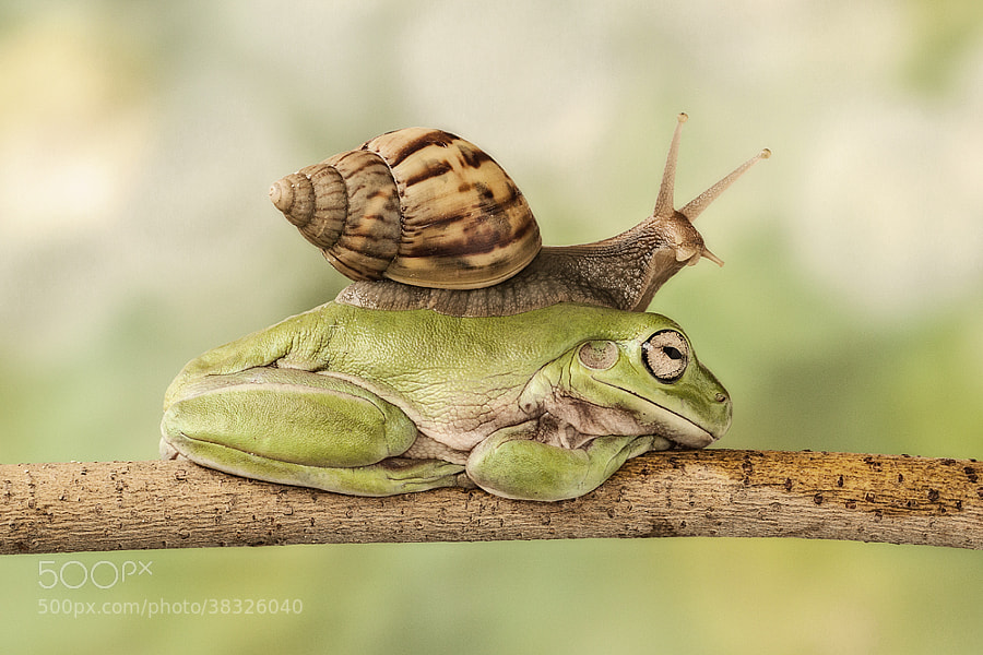 Double Decker  by Lessy Sebastian on 500px.com