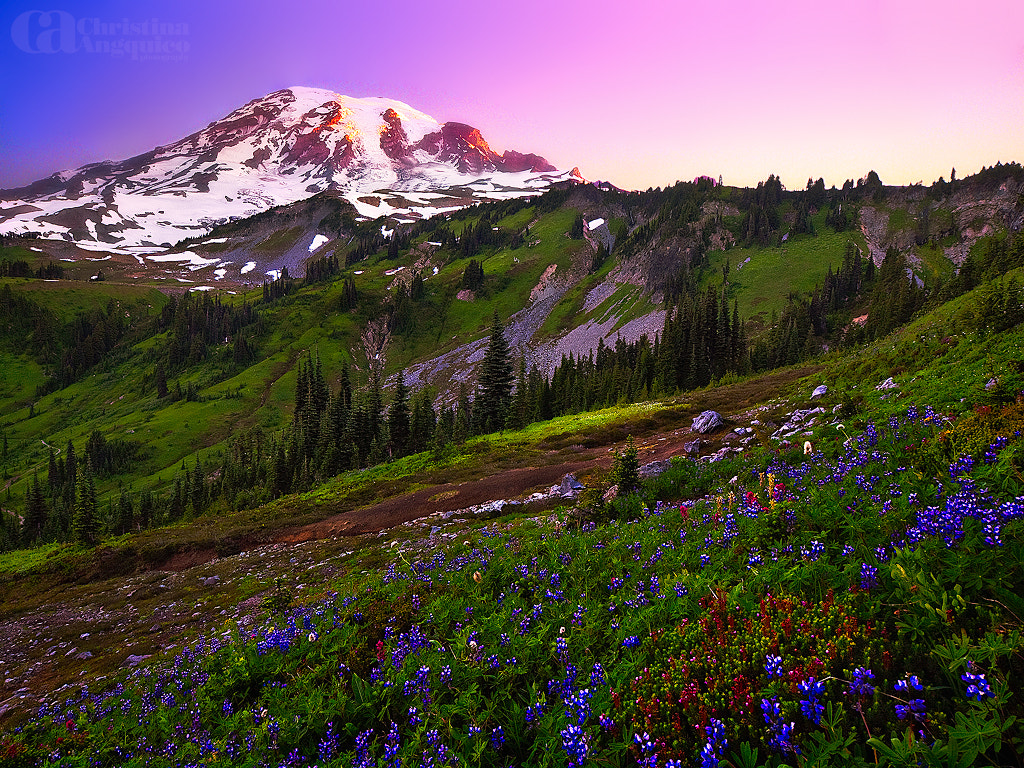 Photograph Mt. Rainier by Christina Angquico on 500px