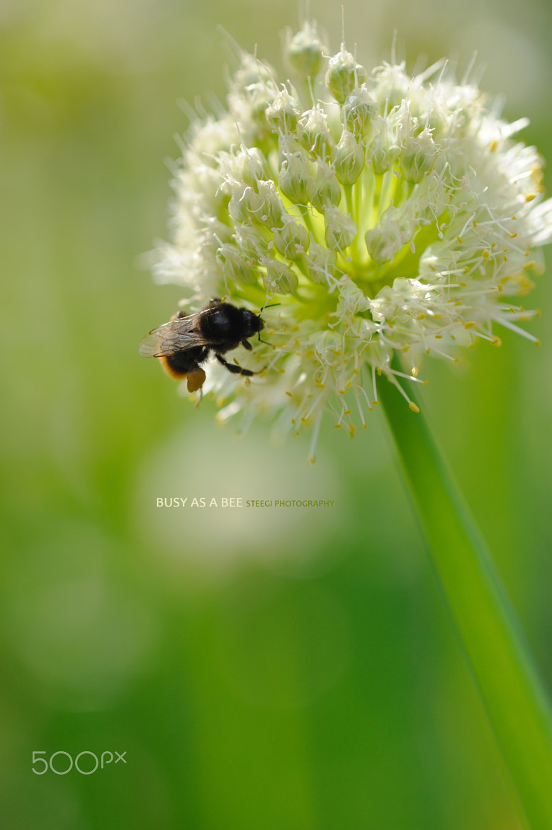 Photograph Busy as a Bee by Andreas Steegmann on 500px