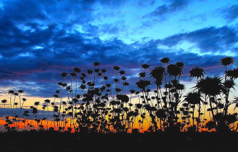 """Photograph """"thistle & after sunset """" by e&e photography on 500px"""