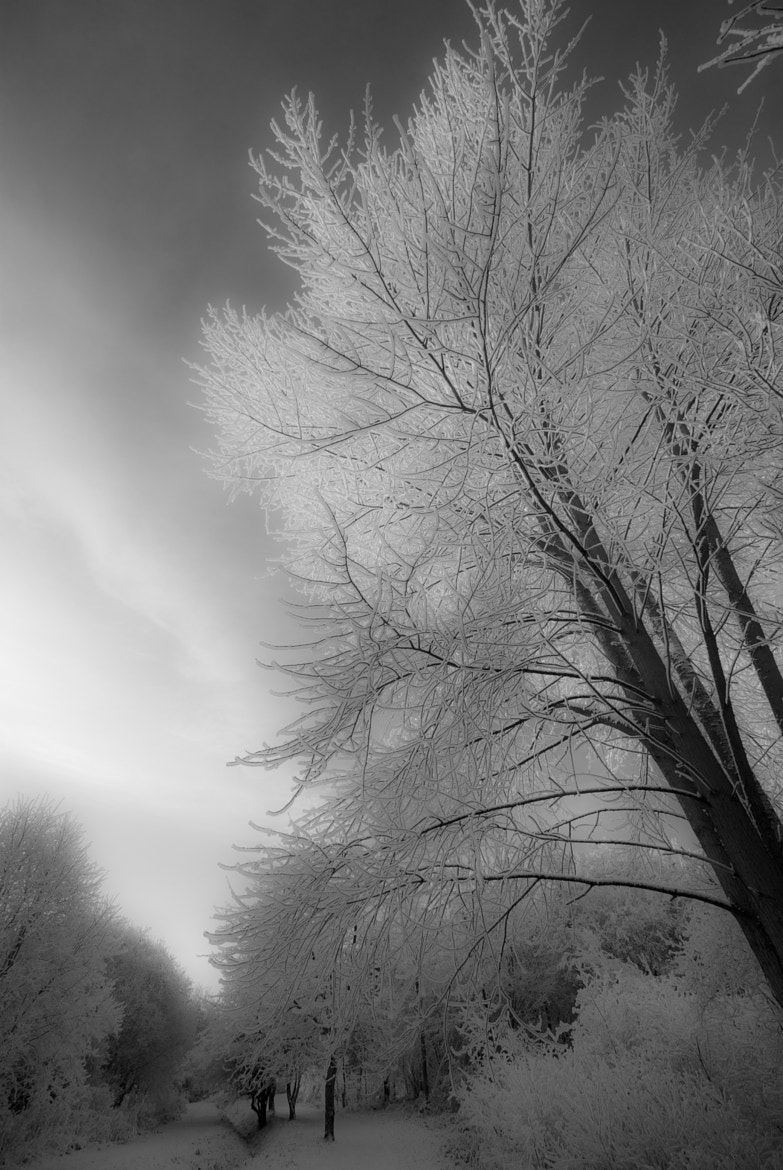 Photograph winter by Marc Melander on 500px