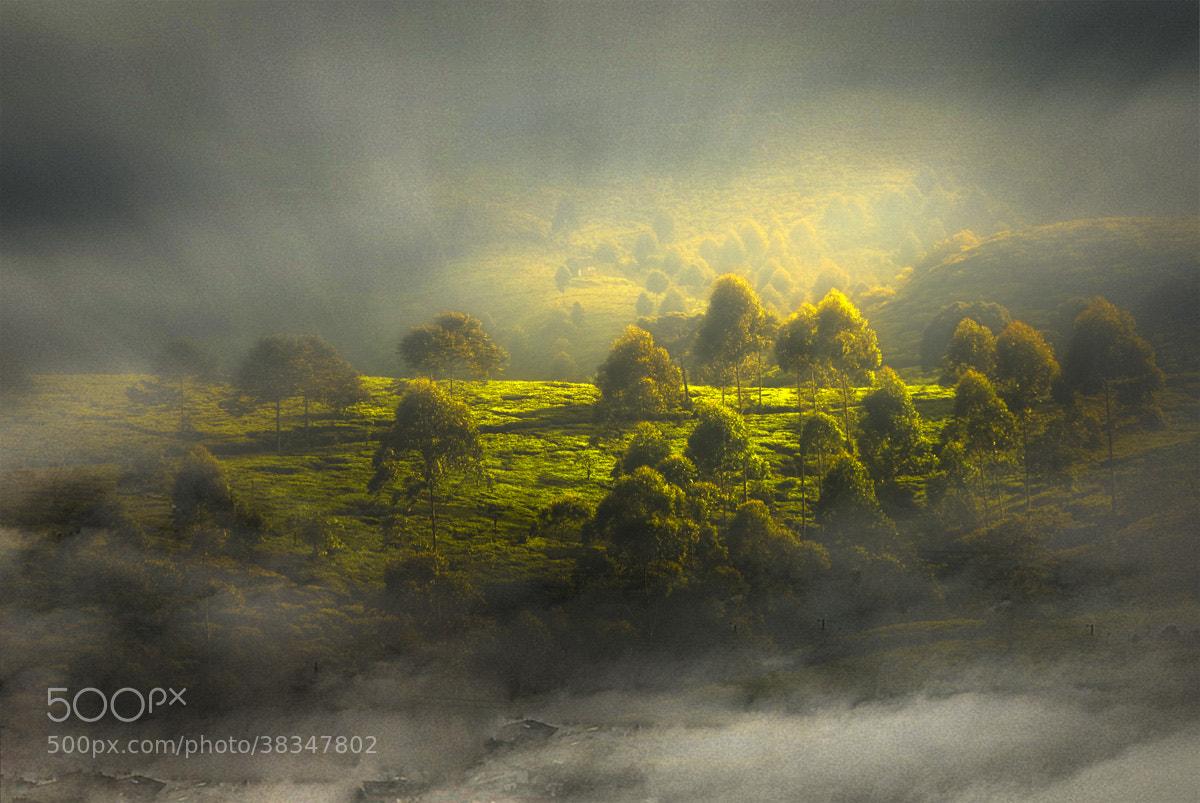 Photograph Fog browse through the grass by Saelan Wangsa on 500px