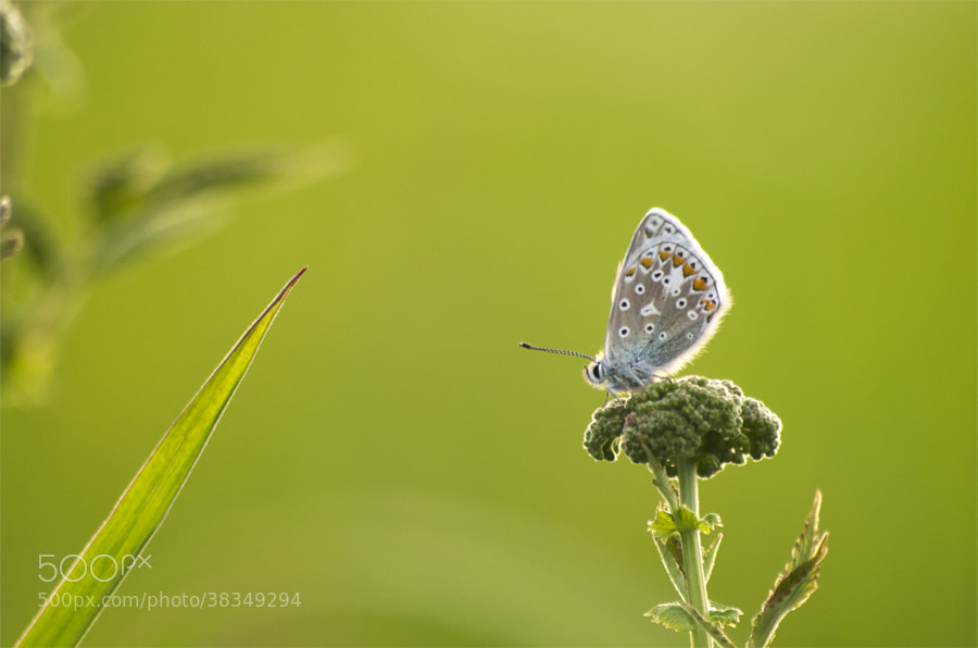 Photograph  butterfly  by Justas R on 500px