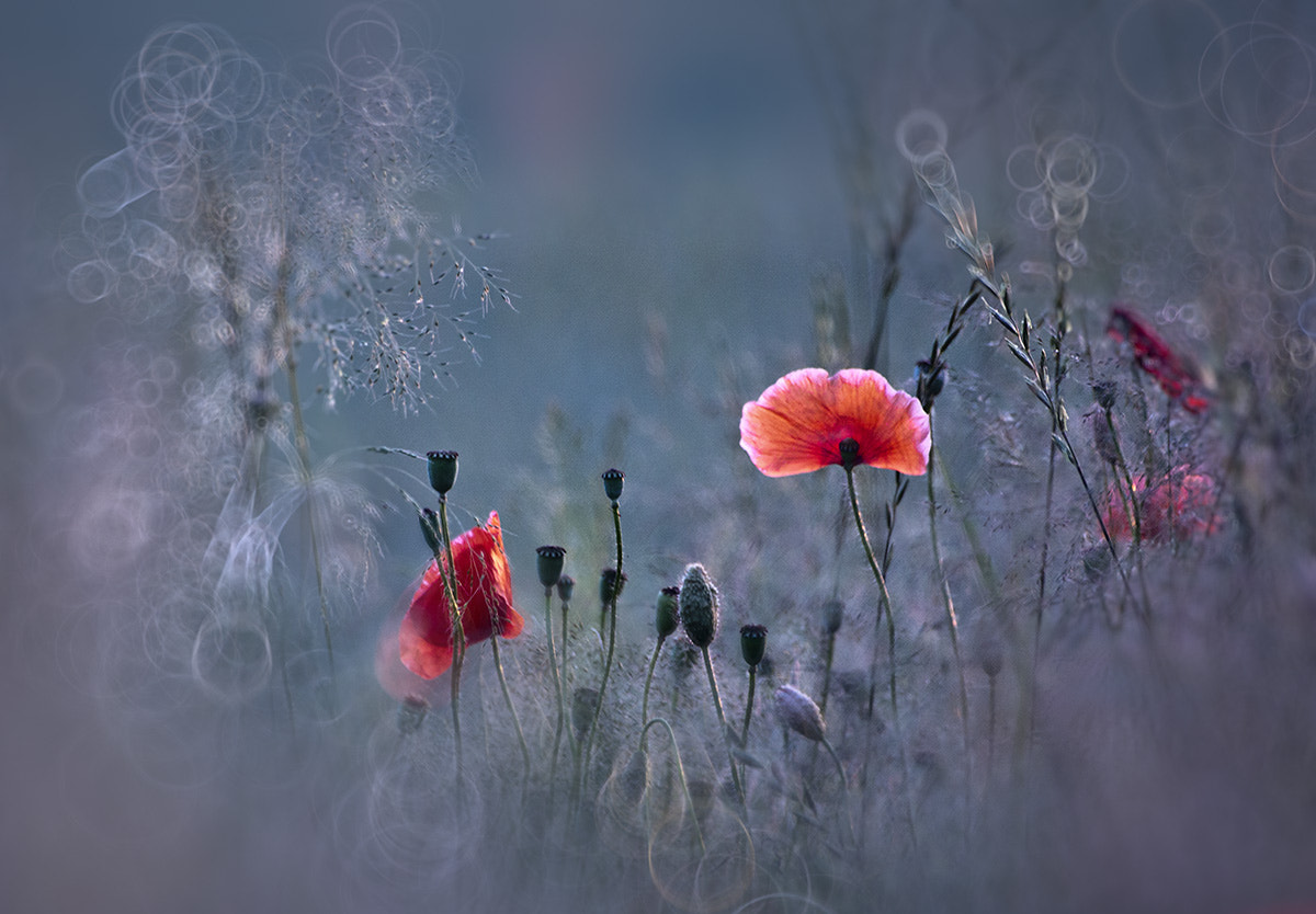 Photograph Summer Inspirations ... by Iza Ślusarz on 500px