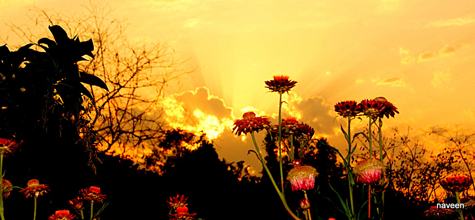 Photograph Sunsetting over flowers by naveen sharma on 500px