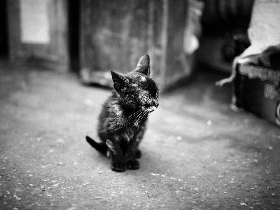 Photograph Egypt. Cat by Olga  Babych on 500px