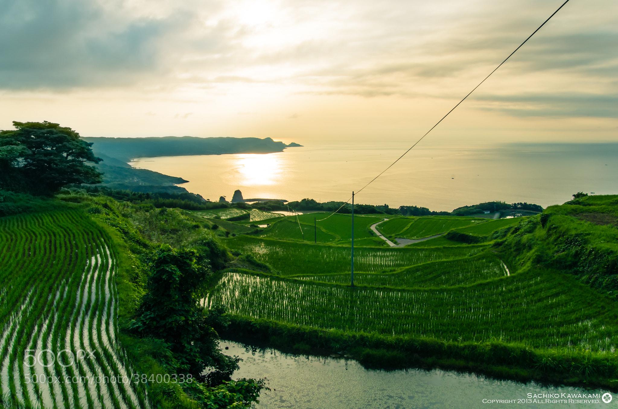Photograph 日本の棚田 by Sachiko Kawakami on 500px