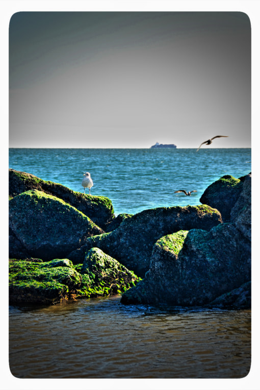 Photograph On The Rocks by Jennifer Marie Decio on 500px
