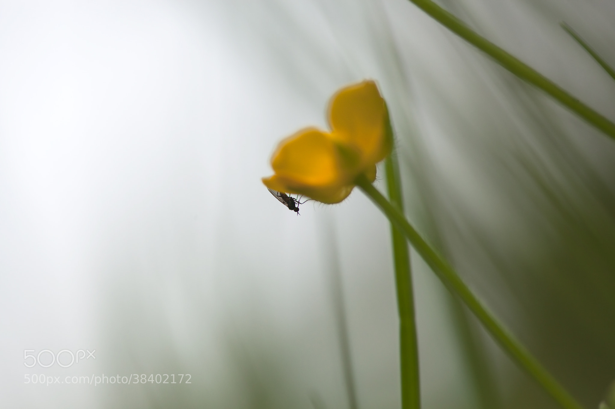 Photograph The small creatures world by Tone Sundland on 500px